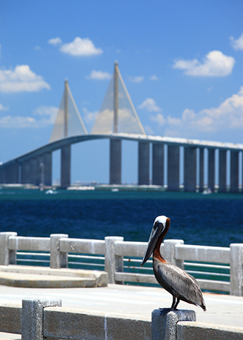Standort: Clearwarter Skyway Bridge
